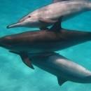 dolfijnmomenten