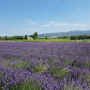 Herbronnen in de Provence