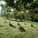 Meditatieretraet- soundhealing