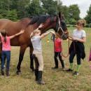 De Groenen Hoek vzw - Zomerkampen met paarden